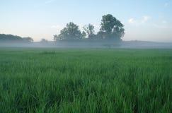 Primavera brumosa del prado en la salida del sol Foto de archivo libre de regalías