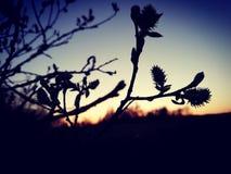 Primavera, buon giorno della natura soleggiato immagini stock libere da diritti
