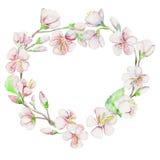 Primavera, cereza, manzana, flores Objeto de la acuarela Imagen de archivo libre de regalías