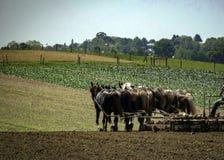 Primavera che ara sull'azienda agricola Immagini Stock Libere da Diritti