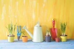 Primavera che fa il giardinaggio, giovani fiori, utensili di giardinaggio Fotografia Stock Libera da Diritti