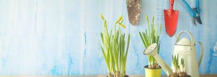 Primavera che fa il giardinaggio, giovani utensili di giardinaggio di fiori, Immagini Stock