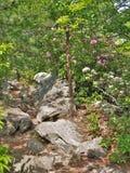 Primavera che fiorisce al parco di stato d'attaccatura della roccia Fotografie Stock