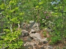 Primavera che fiorisce al parco di stato d'attaccatura della roccia Fotografia Stock
