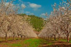 Primavera che fiorisce nel giardino immagine stock libera da diritti