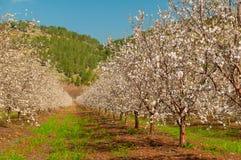 Primavera che fiorisce nel giardino immagine stock