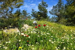 Primavera che fiorisce nella riserva naturale Immagini Stock