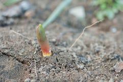 Primavera che riscalda per le piante fotografia stock