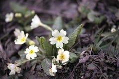Primavera che si sveglia Immagine Stock
