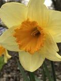Primavera che si sveglia! Fotografie Stock