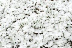 Primavera che va dopo l'inverno Fotografia Stock