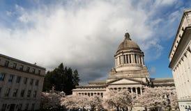 Primavera Cherry Blos de Washington State Capital Building Olympia imágenes de archivo libres de regalías