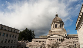 primavera Cherry Blos de Washington State Capital Building Olympia fotografia de stock