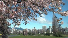 Primavera Cherry Blossoms Vancouver 4K UHD almacen de metraje de vídeo