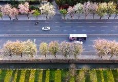 Primavera in città Immagine Stock