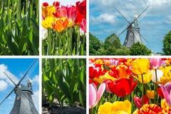 Primavera - collage dei tulipani con il mulino a vento Fotografia Stock Libera da Diritti