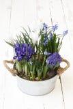 primavera, composição das flores no potenciômetro no branco de madeira Foto de Stock