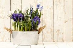 Primavera, composición de las flores en potes en blanco de madera Fotografía de archivo libre de regalías