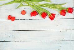 Primavera con el fondo rojo de los tulipanes foto de archivo