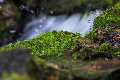 Primavera con el musgo Foto de archivo libre de regalías