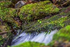 Primavera con el musgo Fotografía de archivo libre de regalías