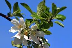 Primavera con los árboles florecientes 5 Fotos de archivo