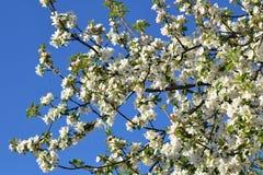 Primavera con los árboles florecientes 1 Foto de archivo libre de regalías