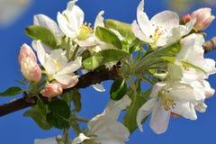 Primavera con los árboles florecientes 3 Imágenes de archivo libres de regalías
