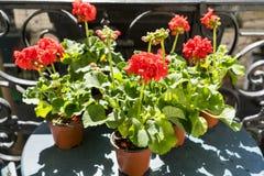 Primavera con los geranios rojos en un balcón en París, Francia Fotos de archivo libres de regalías