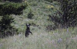 Primavera Cub Imagenes de archivo