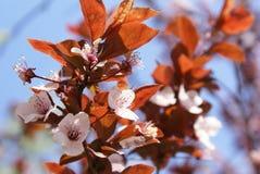 Primavera de 2008, flores selvagens fotografia de stock royalty free