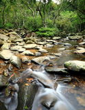 Primavera de agua en bosque Imágenes de archivo libres de regalías