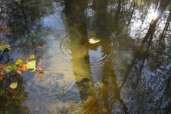 Primavera de agua en bosque Fotografía de archivo libre de regalías