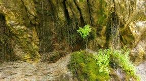Primavera de agua en rocas cubiertas de musgo imagen de archivo