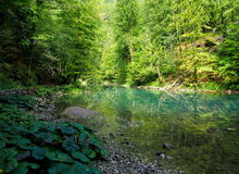 Primavera de Kupa del río Imagenes de archivo