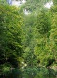 Primavera de Kupa del río Foto de archivo
