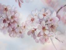 Primavera de la acuarela de la flor de Sakura Fotografía de archivo libre de regalías