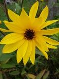 Primavera de la belleza Fotos de archivo