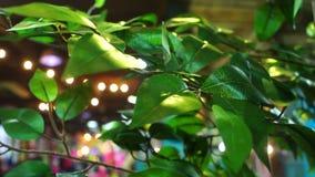 Primavera de la botánica del jardín almacen de metraje de vídeo