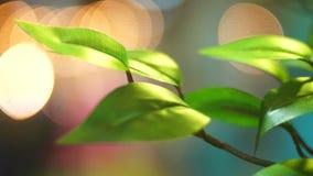 Primavera de la botánica del jardín almacen de video