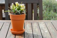 Primavera de la primavera en el pote foto de archivo libre de regalías