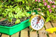 Primavera de la estación que planta almácigos de la flor Imagen de archivo