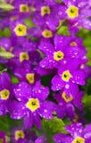 Primavera de la flor. Fotografía de archivo libre de regalías