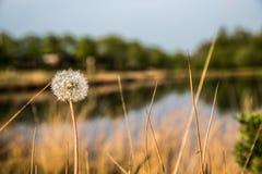 Primavera de la flor imágenes de archivo libres de regalías