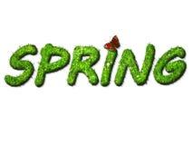 Primavera de la hierba fotografía de archivo libre de regalías
