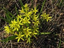 Primavera de la primavera de los brotes en un fondo verde de la hierba Fotos de archivo