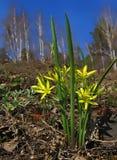 Primavera de la primavera de los brotes en un fondo verde de la hierba Foto de archivo