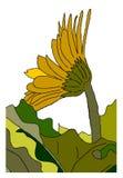 Primavera de la margarita Imágenes de archivo libres de regalías