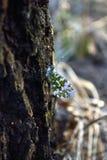 Primavera de la mariposa en el árbol Imágenes de archivo libres de regalías