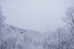 primavera de la nieve foto de archivo libre de regalías